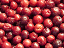 Cherries Sour IQF 1kg SpeedyBerry